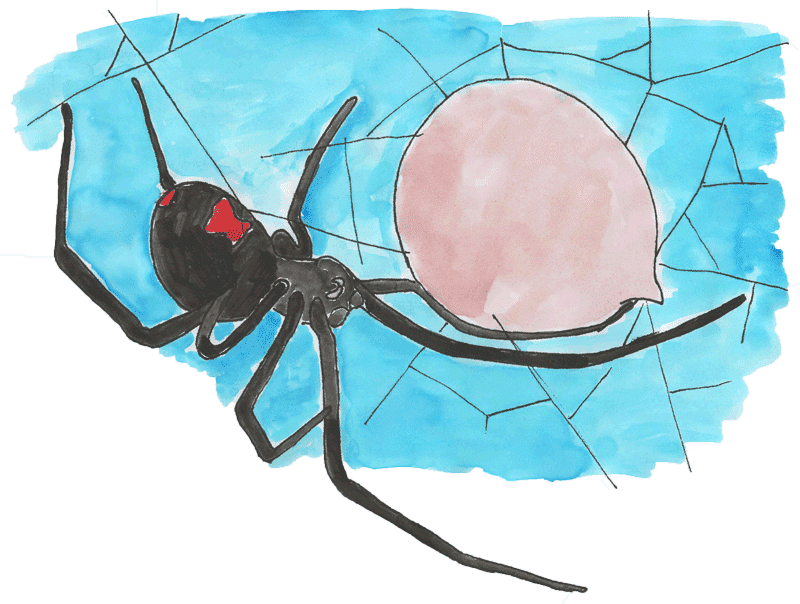 black widow spider with egg sac